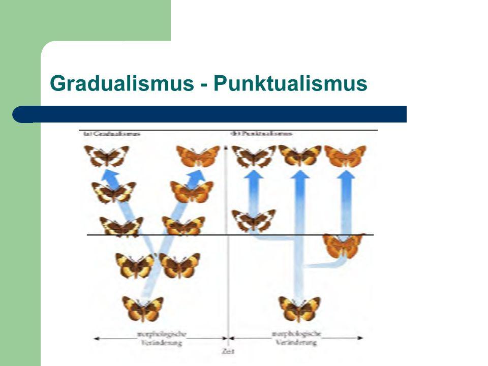 Gradualismus - Punktualismus