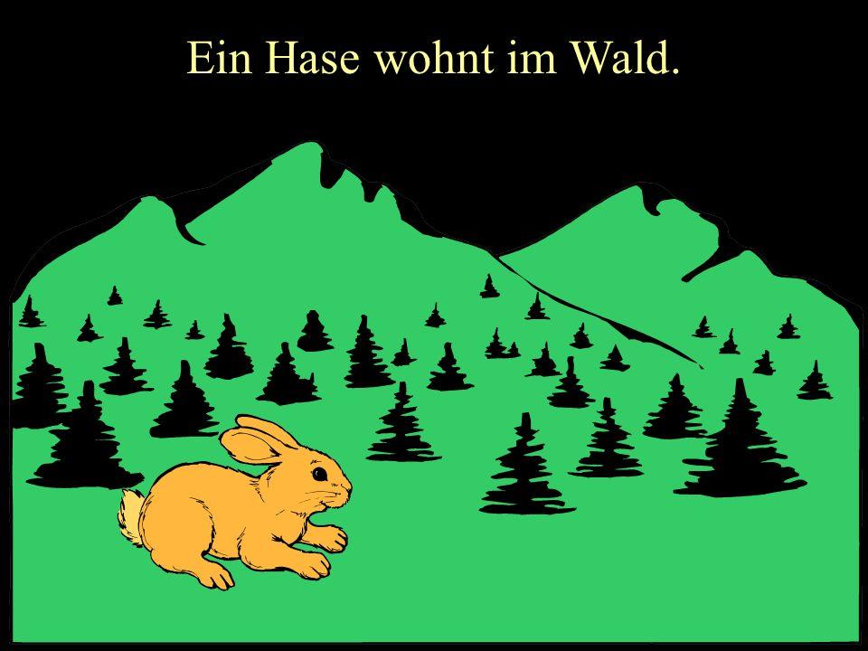 Ein Hase wohnt im Wald.