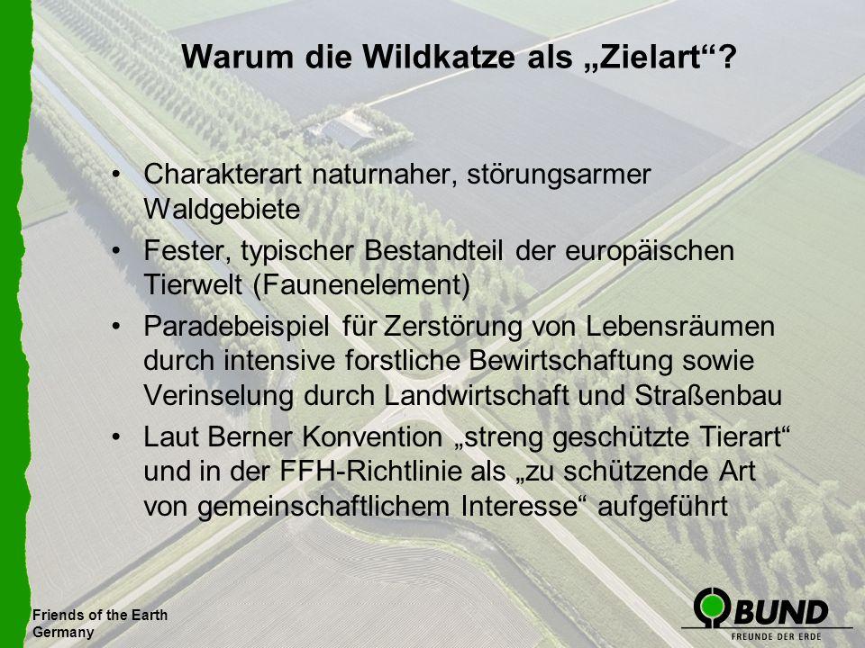 Friends of the Earth Germany Warum die Wildkatze als Zielart? Charakterart naturnaher, störungsarmer Waldgebiete Fester, typischer Bestandteil der eur