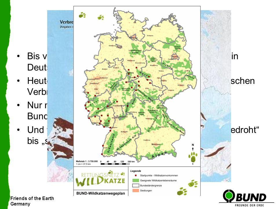 Friends of the Earth Germany Ihre Situation… Bis vor 150 Jahren große vernetzte Populationen in Deutschland und Europa Heute liegt Deutschland im Zent
