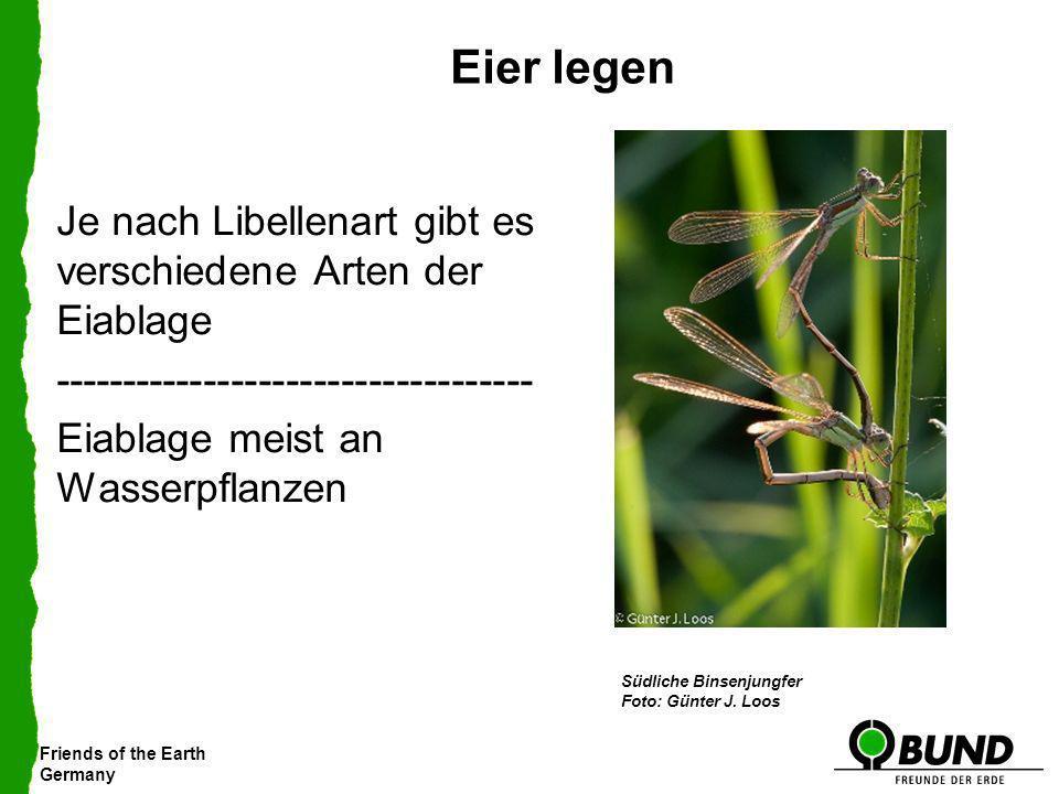 Friends of the Earth Germany Eier legen Je nach Libellenart gibt es verschiedene Arten der Eiablage ----------------------------------- Eiablage meist