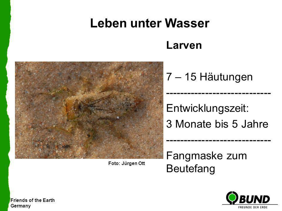 Friends of the Earth Germany Leben unter Wasser Larven 7 – 15 Häutungen ----------------------------- Entwicklungszeit: 3 Monate bis 5 Jahre ---------