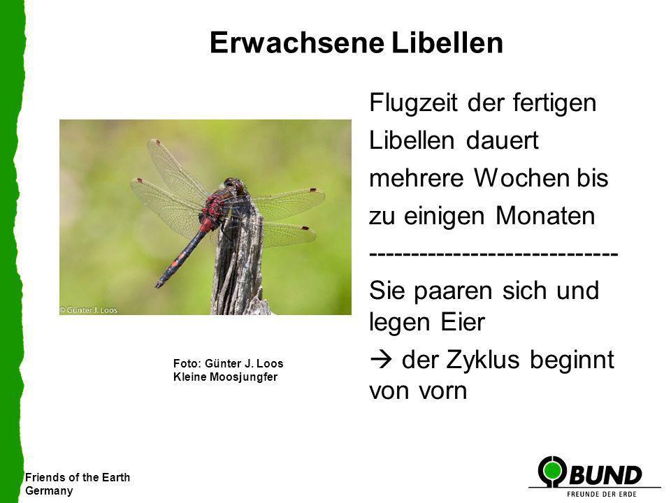 Friends of the Earth Germany Erwachsene Libellen Flugzeit der fertigen Libellen dauert mehrere Wochen bis zu einigen Monaten -------------------------