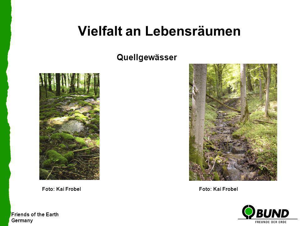 Friends of the Earth Germany Vielfalt an Lebensräumen Quellgewässer Foto: Kai Frobel