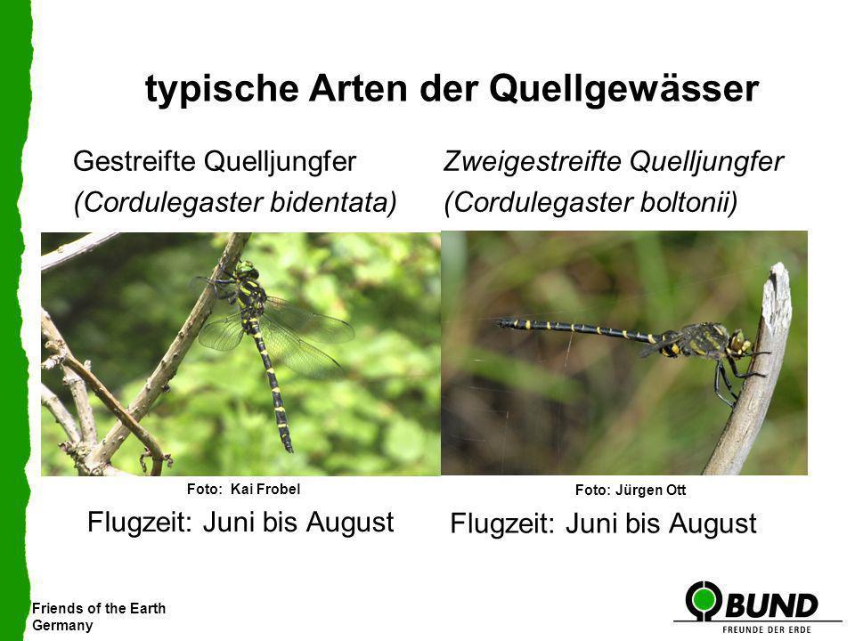 Friends of the Earth Germany typische Arten der Quellgewässer Gestreifte Quelljungfer (Cordulegaster bidentata) Zweigestreifte Quelljungfer (Cordulega