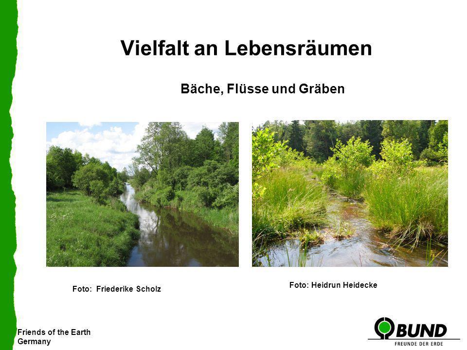 Friends of the Earth Germany Vielfalt an Lebensräumen Bäche, Flüsse und Gräben Foto: Friederike Scholz Foto: Heidrun Heidecke