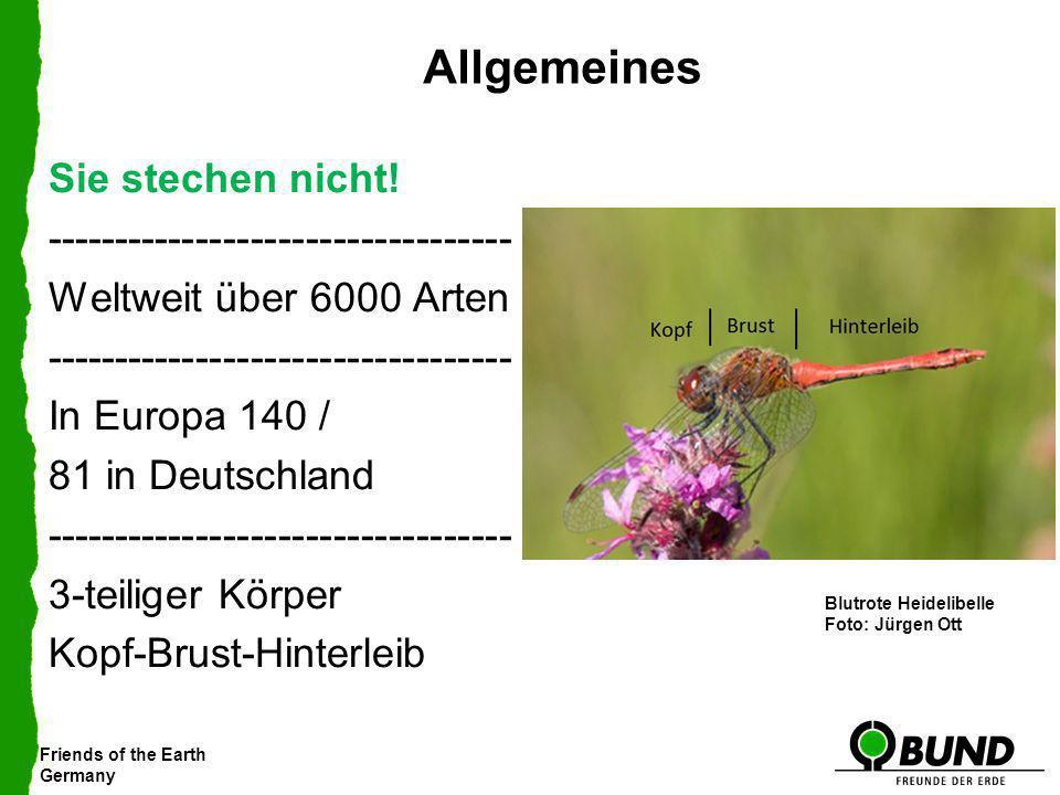 Friends of the Earth Germany Allgemeines Blutrote HeidelibelleKleiner Blaupfeil Gemeine Keiljungfer Spitzenfleck Sie stechen nicht! ------------------