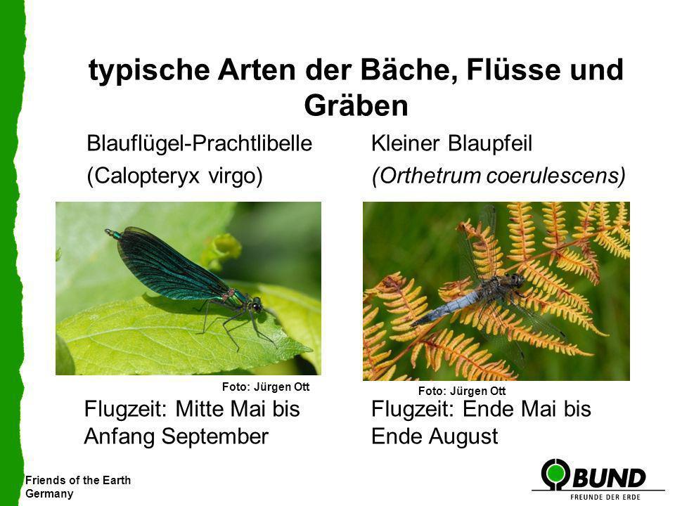 Friends of the Earth Germany typische Arten der Bäche, Flüsse und Gräben Blauflügel-Prachtlibelle (Calopteryx virgo) Kleiner Blaupfeil (Orthetrum coer