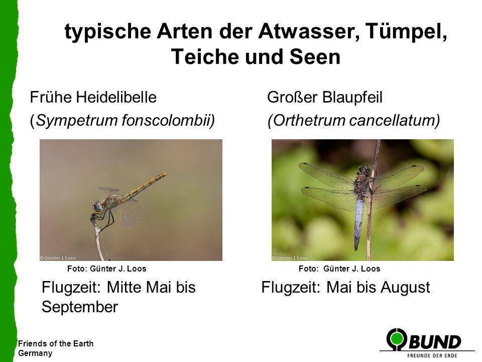Friends of the Earth Germany typische Arten der Atwasser, Tümpel, Teiche und Seen Großer Blaupfeil (Orthetrum cancellatum) Frühe Heidelibelle (Sympetr
