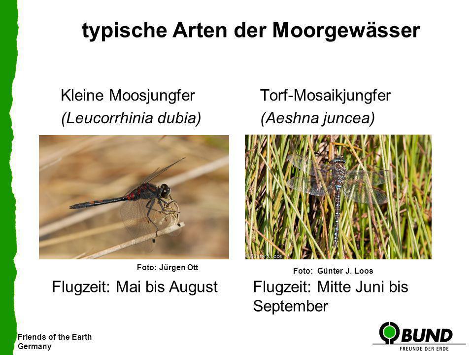 Friends of the Earth Germany typische Arten der Moorgewässer Kleine Moosjungfer (Leucorrhinia dubia) Torf-Mosaikjungfer (Aeshna juncea) Flugzeit: Mai