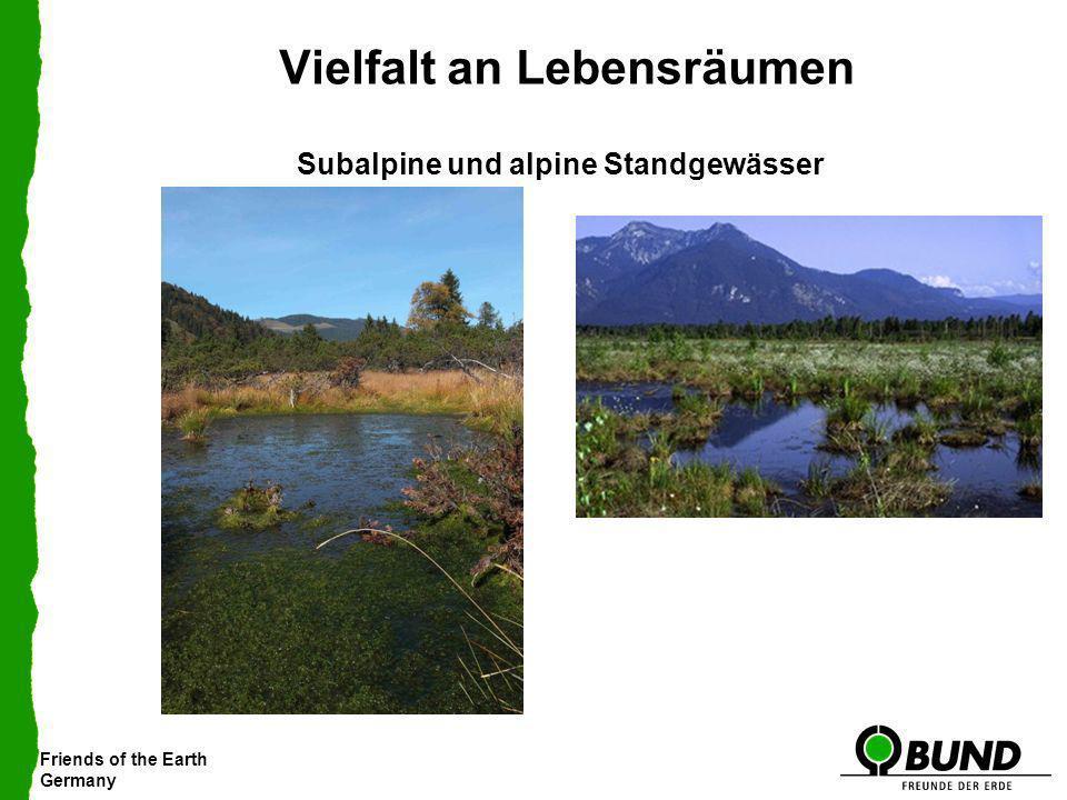 Friends of the Earth Germany Vielfalt an Lebensräumen Subalpine und alpine Standgewässer Foto: