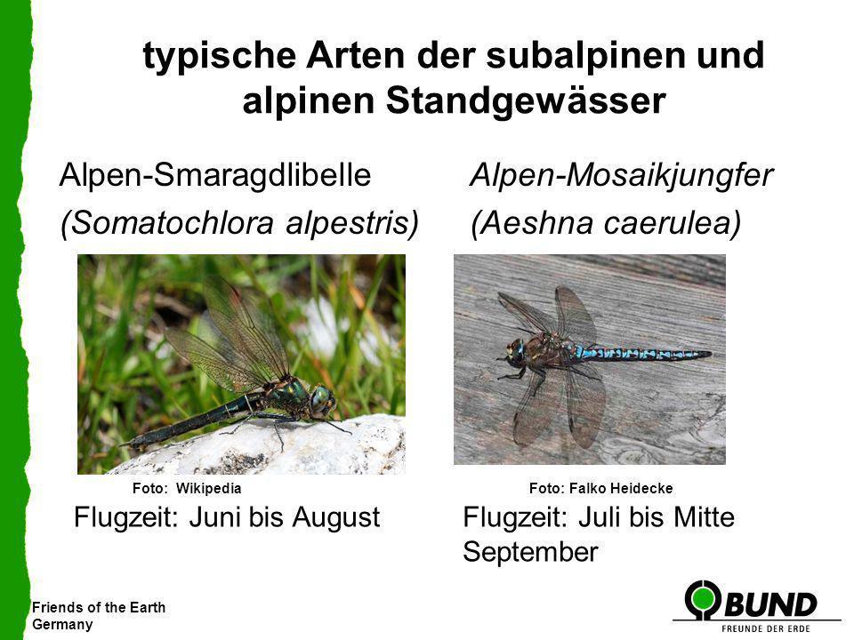 Friends of the Earth Germany typische Arten der subalpinen und alpinen Standgewässer Alpen-Mosaikjungfer (Aeshna caerulea) Alpen-Smaragdlibelle (Somat