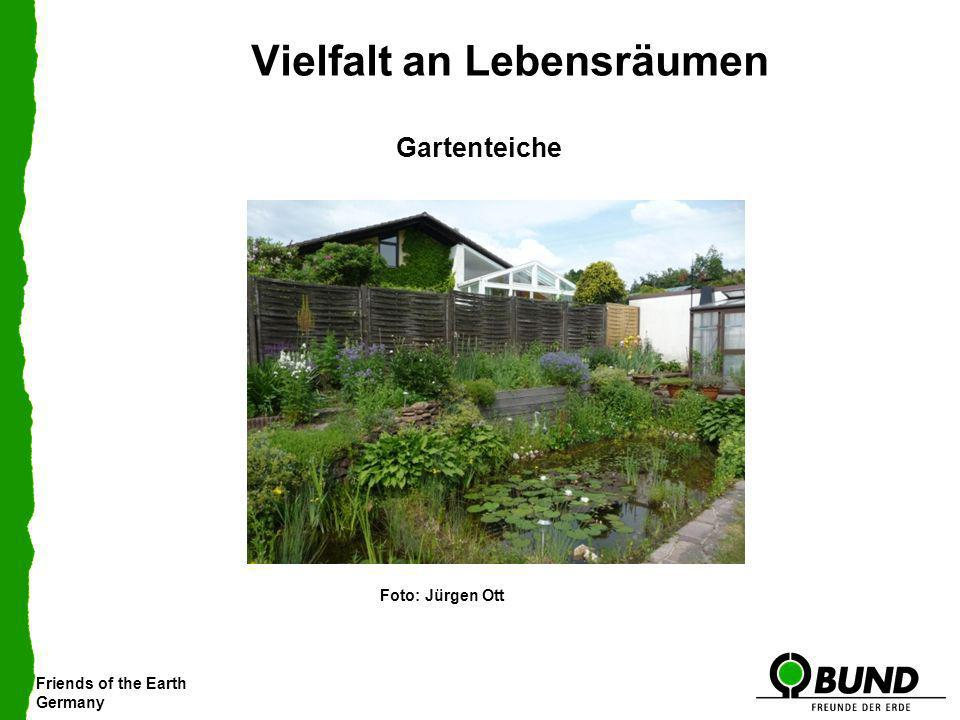 Friends of the Earth Germany Vielfalt an Lebensräumen Gartenteiche Foto: Jürgen Ott