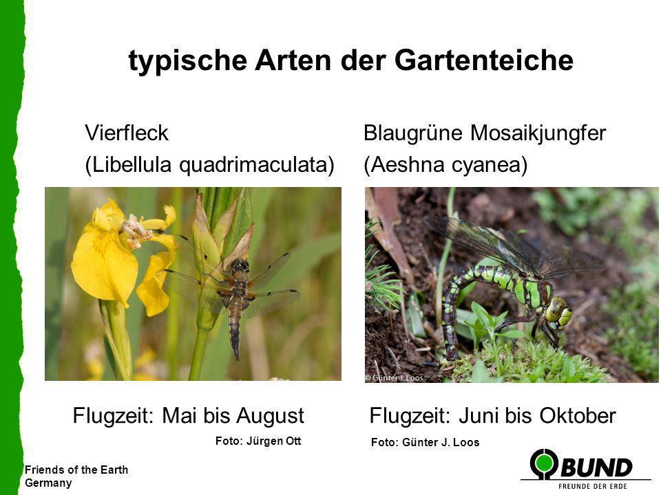 Friends of the Earth Germany typische Arten der Gartenteiche Blaugrüne Mosaikjungfer (Aeshna cyanea) Vierfleck (Libellula quadrimaculata) Flugzeit: Ma