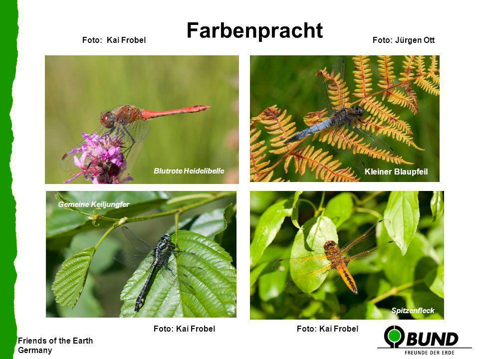 Friends of the Earth Germany Farbenpracht Blutrote HeidelibelleKleiner Blaupfeil Gemeine Keiljungfer Spitzenfleck Foto: Jürgen Ott Foto: Kai Frobel Kl