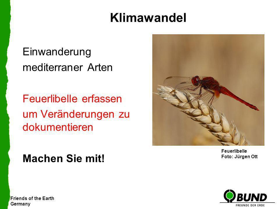 Friends of the Earth Germany Klimawandel Einwanderung mediterraner Arten Feuerlibelle erfassen um Veränderungen zu dokumentieren Machen Sie mit! Gebän