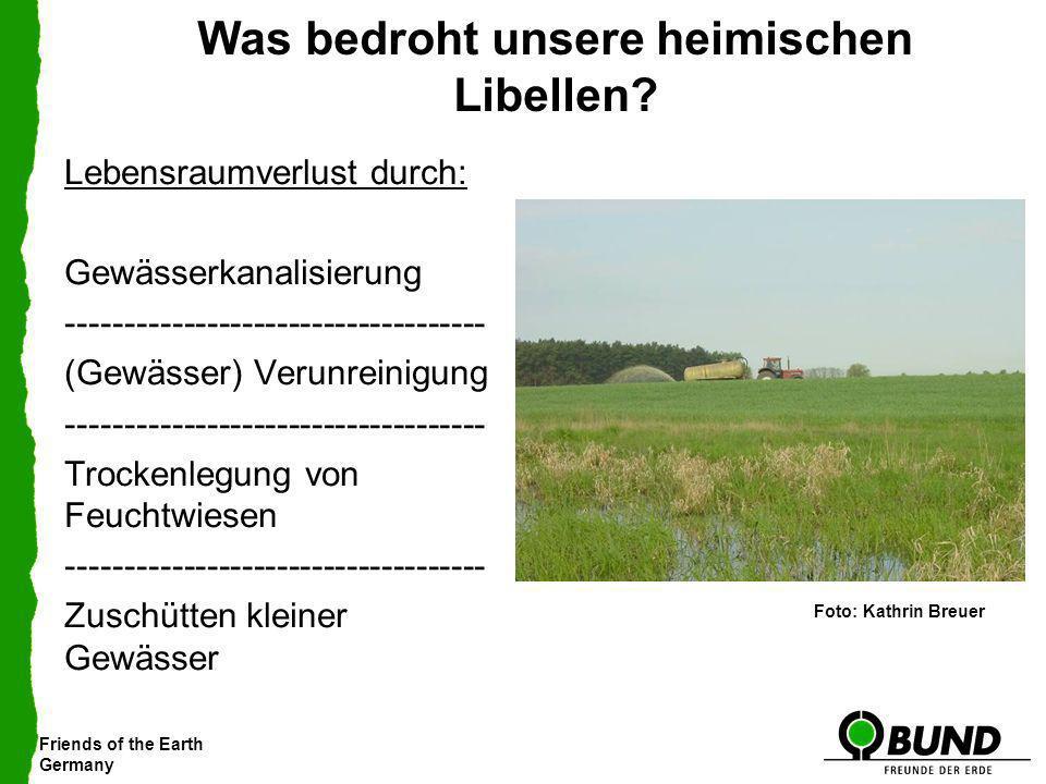 Friends of the Earth Germany Was bedroht unsere heimischen Libellen? Lebensraumverlust durch: Gewässerkanalisierung ----------------------------------