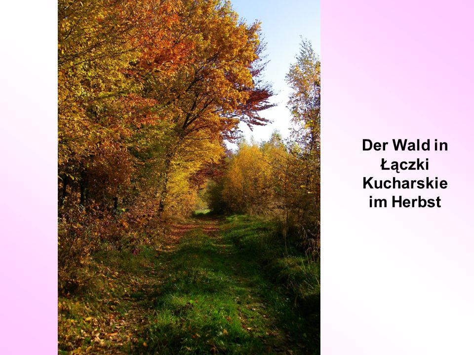 Der Wald in Łączki Kucharskie im Herbst