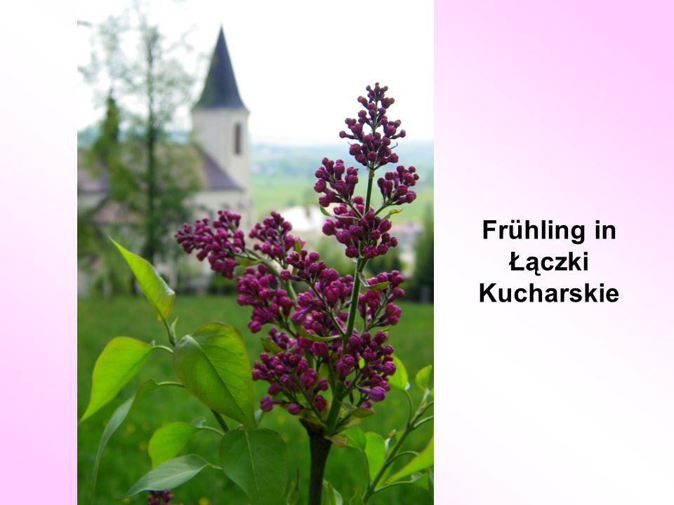 Frühling in Łączki Kucharskie