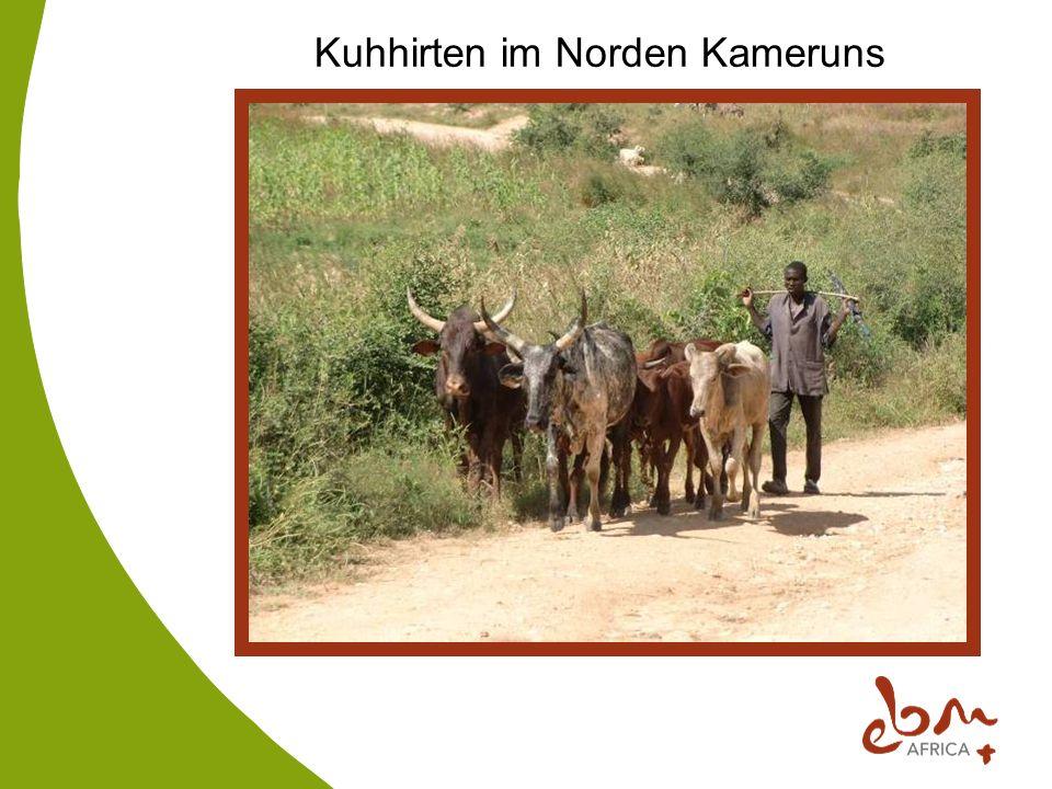 Kuhhirten im Norden Kameruns