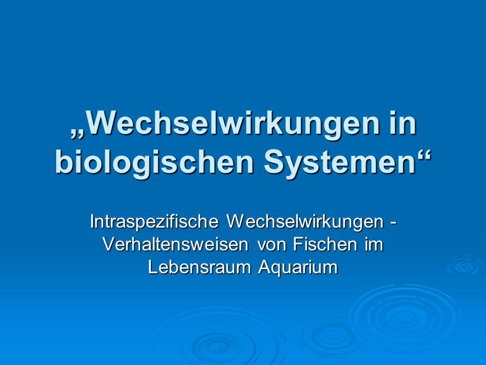 Wechselwirkungen in biologischen Systemen Intraspezifische Wechselwirkungen - Verhaltensweisen von Fischen im Lebensraum Aquarium