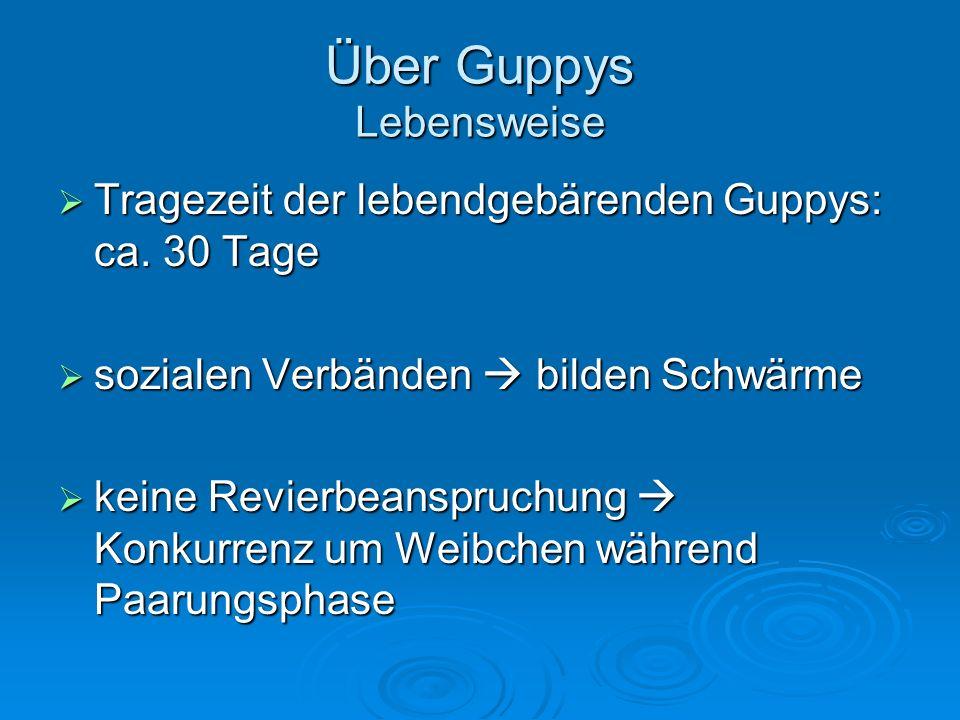 Über Guppys Lebensweise Tragezeit der lebendgebärenden Guppys: ca. 30 Tage Tragezeit der lebendgebärenden Guppys: ca. 30 Tage sozialen Verbänden bilde