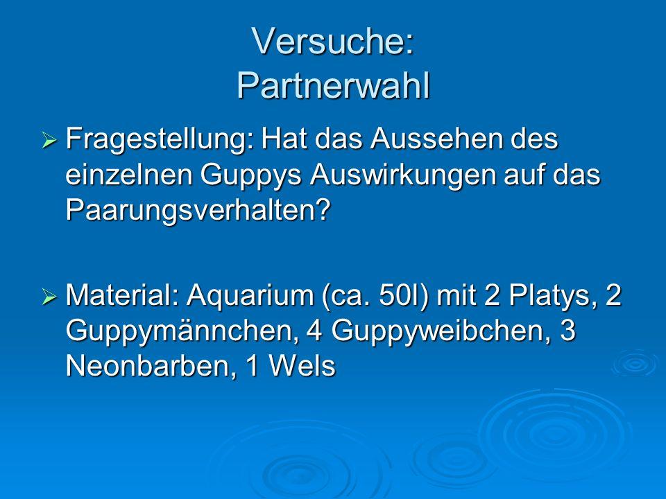 Versuche: Partnerwahl Fragestellung: Hat das Aussehen des einzelnen Guppys Auswirkungen auf das Paarungsverhalten.