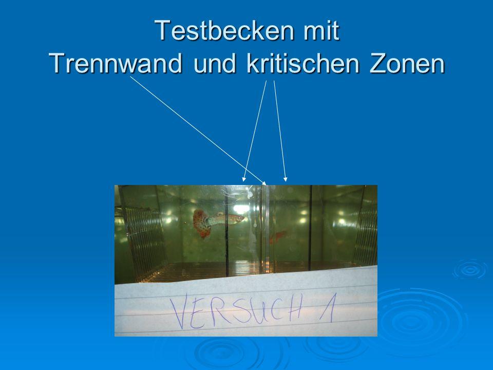 Testbecken mit Trennwand und kritischen Zonen