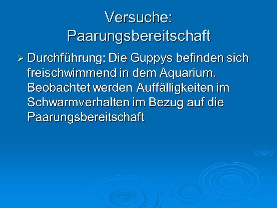 Versuche: Paarungsbereitschaft Durchführung: Die Guppys befinden sich freischwimmend in dem Aquarium. Beobachtet werden Auffälligkeiten im Schwarmverh