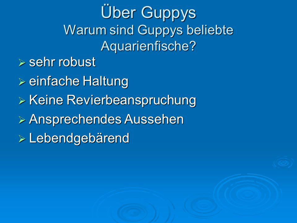 Über Guppys Warum sind Guppys beliebte Aquarienfische? sehr robust sehr robust einfache Haltung einfache Haltung Keine Revierbeanspruchung Keine Revie