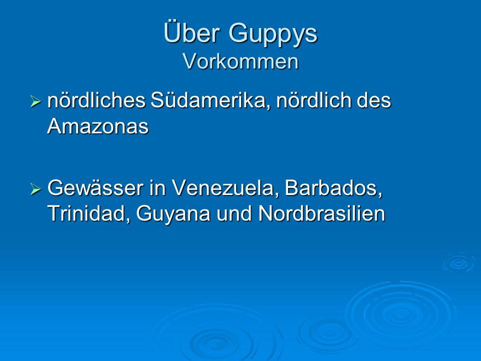 Über Guppys Vorkommen nördliches Südamerika, nördlich des Amazonas nördliches Südamerika, nördlich des Amazonas Gewässer in Venezuela, Barbados, Trini