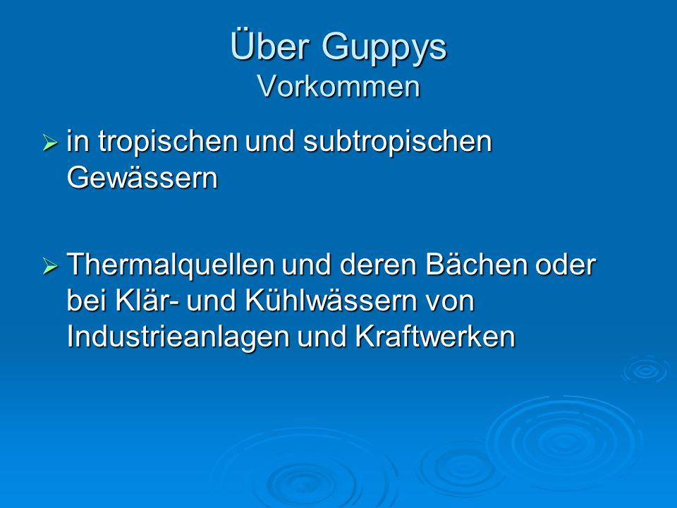 Über Guppys Vorkommen in tropischen und subtropischen Gewässern in tropischen und subtropischen Gewässern Thermalquellen und deren Bächen oder bei Klä