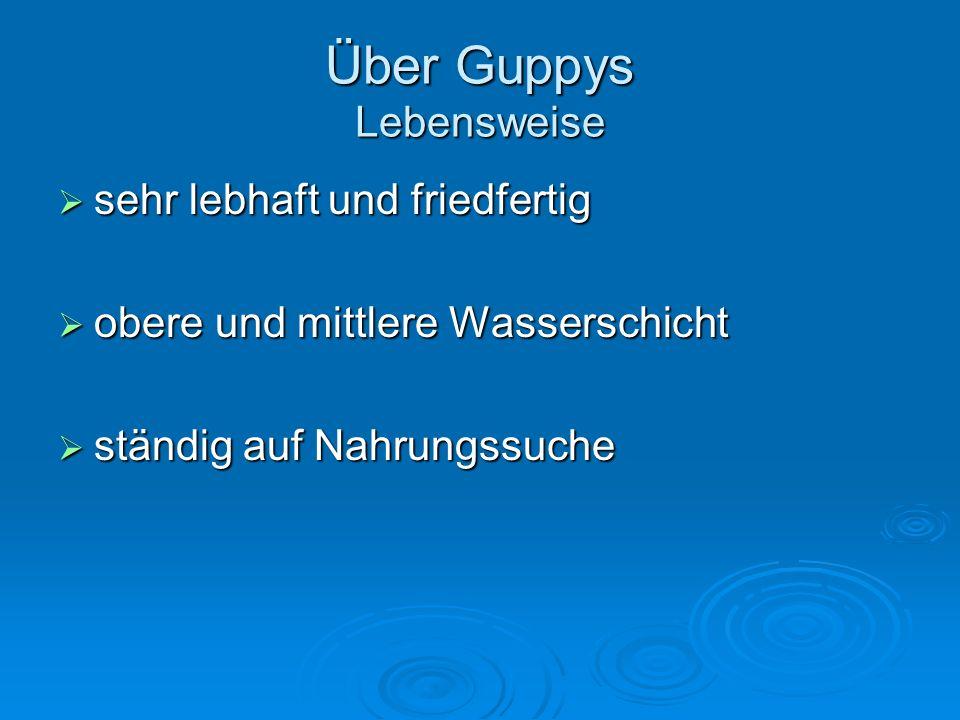 Über Guppys Lebensweise Tragezeit der lebendgebärenden Guppys: ca.