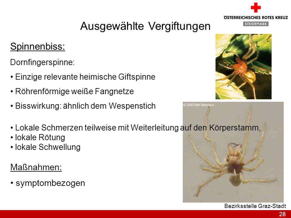 28 Bezirksstelle Graz-Stadt Ausgewählte Vergiftungen Spinnenbiss: Dornfingerspinne: Einzige relevante heimische Giftspinne Röhrenförmige weiße Fangnet