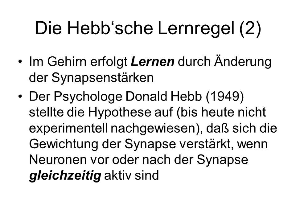 Die Hebbsche Lernregel (2) Im Gehirn erfolgt Lernen durch Änderung der Synapsenstärken Der Psychologe Donald Hebb (1949) stellte die Hypothese auf (bis heute nicht experimentell nachgewiesen), daß sich die Gewichtung der Synapse verstärkt, wenn Neuronen vor oder nach der Synapse gleichzeitig aktiv sind