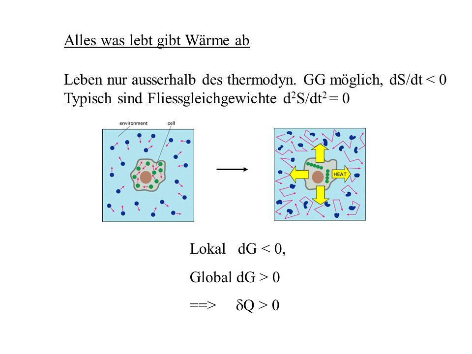Alles was lebt gibt Wärme ab Lokal dG < 0, Global dG > 0 ==> Q > 0 Leben nur ausserhalb des thermodyn. GG möglich, dS/dt < 0 Typisch sind Fliessgleich
