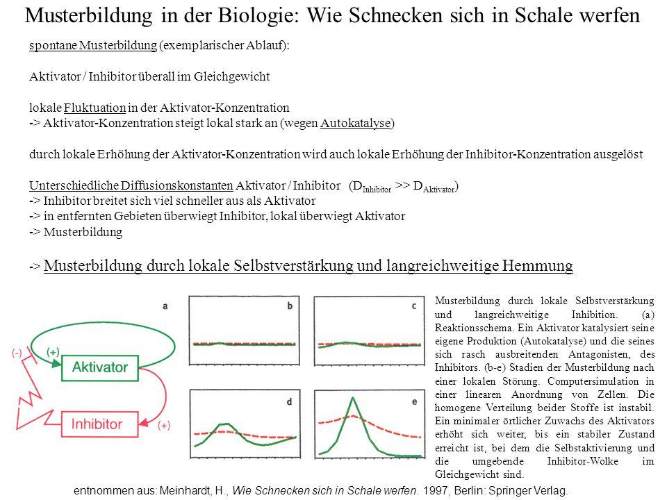 Musterbildung in der Biologie: Wie Schnecken sich in Schale werfen entnommen aus: Meinhardt, H., Wie Schnecken sich in Schale werfen.