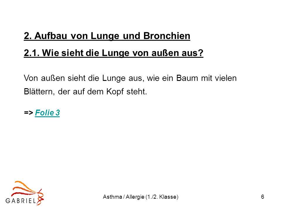 Asthma / Allergie (1./2. Klasse)6 2. Aufbau von Lunge und Bronchien 2.1. Wie sieht die Lunge von außen aus? Von außen sieht die Lunge aus, wie ein Bau