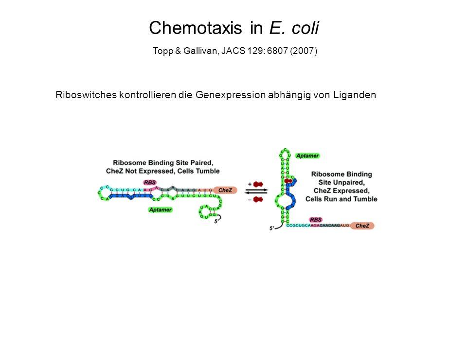Logische biochemische Netzwerke Seelig et al., Science 314: 1585 (2006)