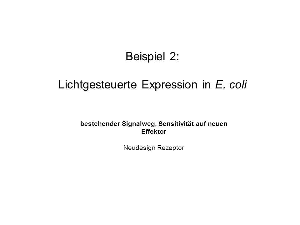 Lichtgesteuerte Expression in E.