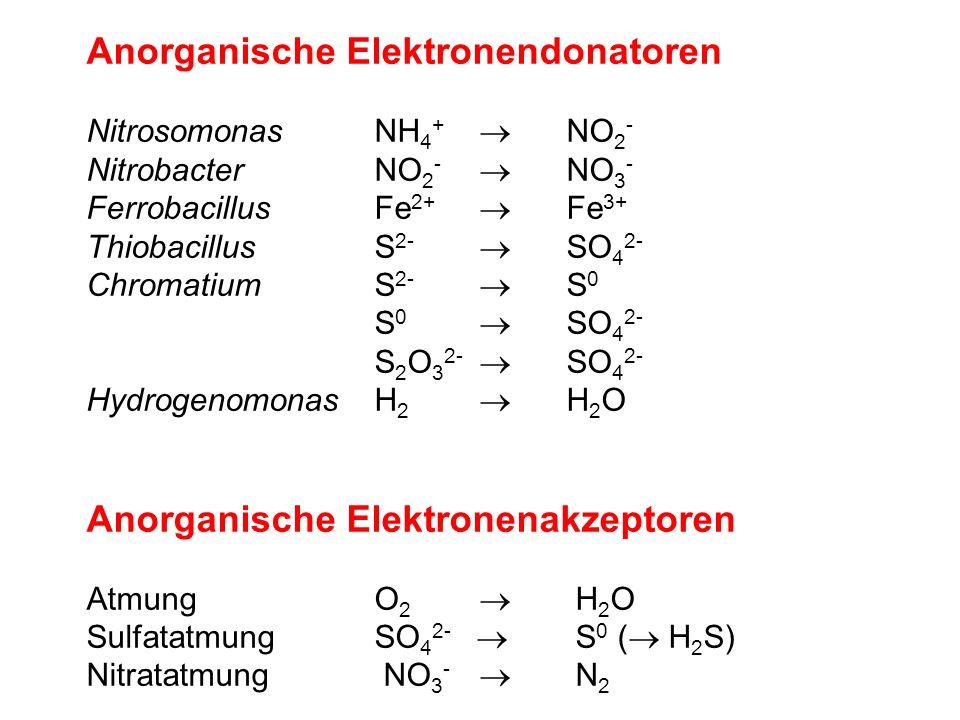 Anorganische Elektronendonatoren NitrosomonasNH 4 + NO 2 - NitrobacterNO 2 - NO 3 - FerrobacillusFe 2+ Fe 3+ ThiobacillusS 2- SO 4 2- ChromatiumS 2- S 0 S 0 SO 4 2- S 2 O 3 2- SO 4 2- HydrogenomonasH 2 H 2 O Anorganische Elektronenakzeptoren AtmungO 2 H 2 O SulfatatmungSO 4 2- S 0 ( H 2 S) Nitratatmung NO 3 - N 2