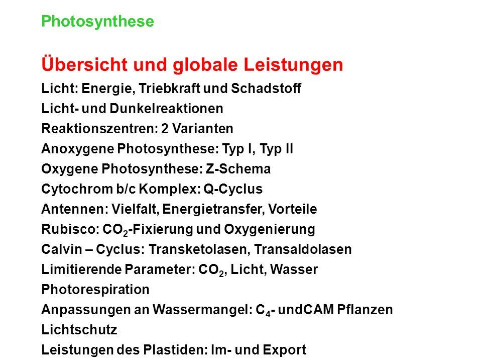 Photosynthese Übersicht und globale Leistungen Licht: Energie, Triebkraft und Schadstoff Licht- und Dunkelreaktionen Reaktionszentren: 2 Varianten Anoxygene Photosynthese: Typ I, Typ II Oxygene Photosynthese: Z-Schema Cytochrom b/c Komplex: Q-Cyclus Antennen: Vielfalt, Energietransfer, Vorteile Rubisco: CO 2 -Fixierung und Oxygenierung Calvin – Cyclus: Transketolasen, Transaldolasen Limitierende Parameter: CO 2, Licht, Wasser Photorespiration Anpassungen an Wassermangel: C 4 - undCAM Pflanzen Lichtschutz Leistungen des Plastiden: Im- und Export