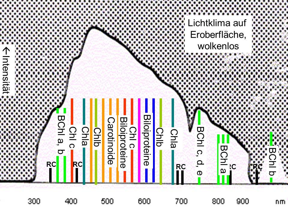 Intensität Lichtklima auf Eroberfläche, wolkenlos RC Chla Chlb Carotinoide BChl a, b BChl a BChl b BChl c, d, e Chl c Biloiproteine