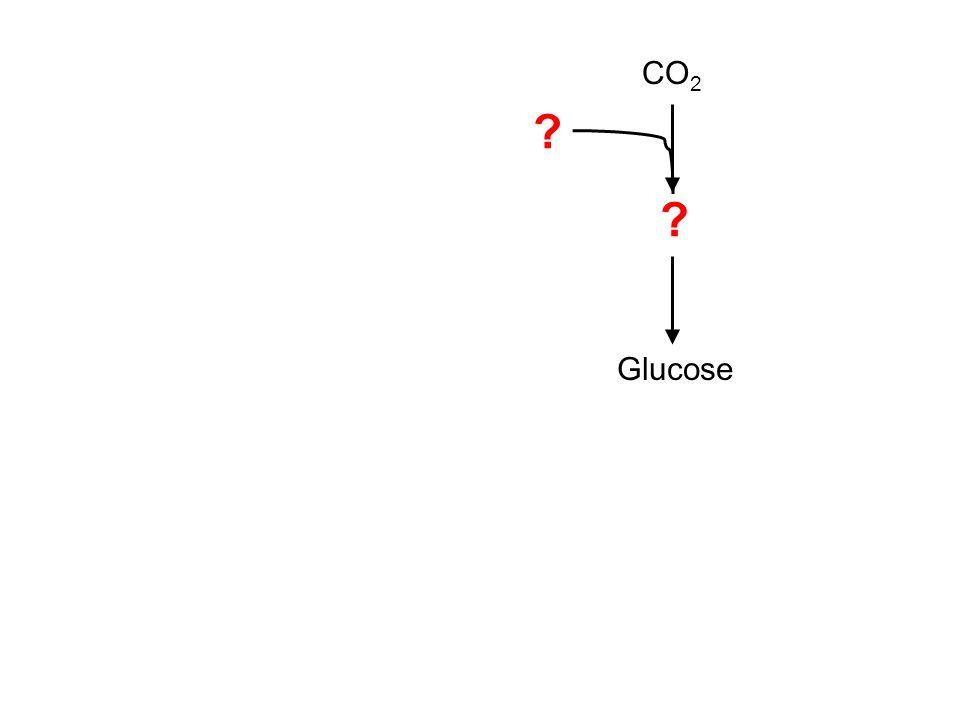 CO 2 Glucose