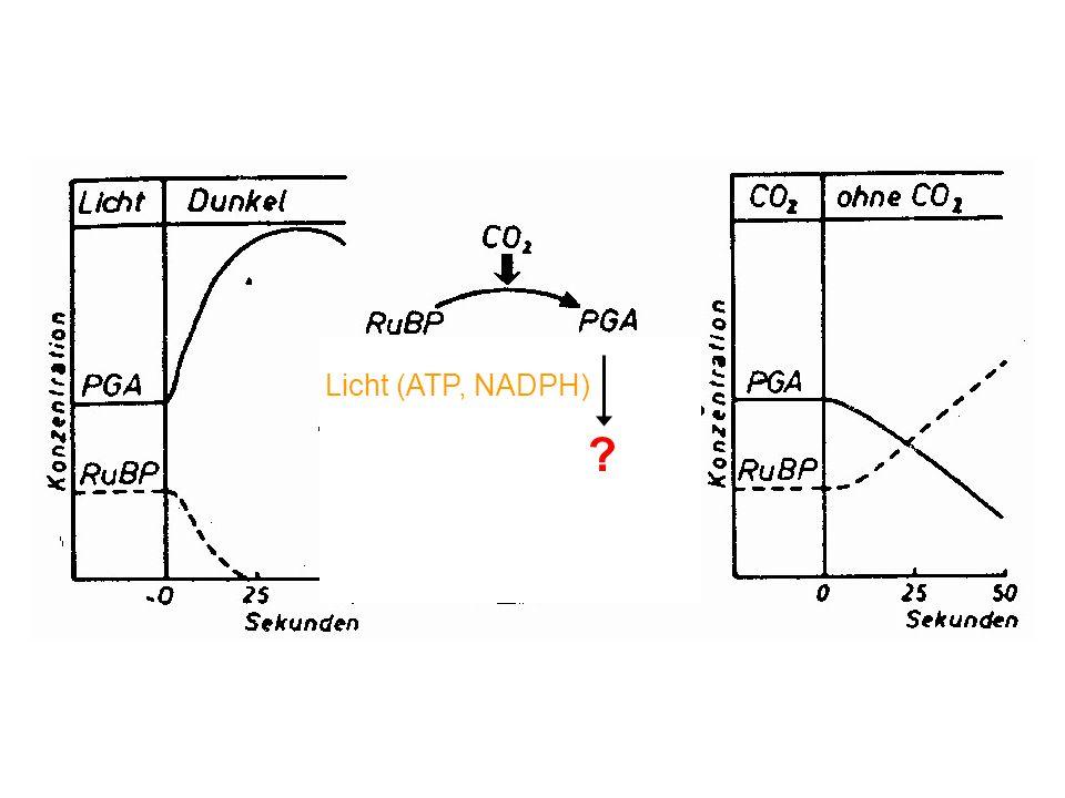 Licht (ATP, NADPH)