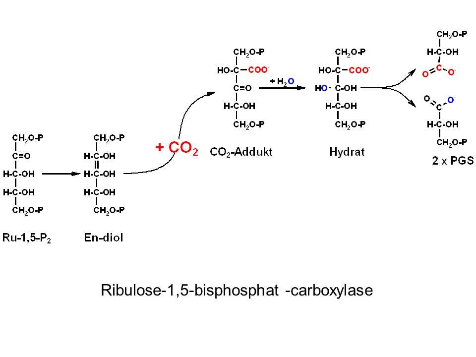 Ribulose-1,5-bisphosphat -carboxylase