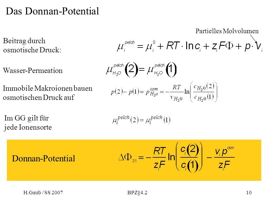 H.Gaub / SS 2007BPZ§4.210 Das Donnan-Potential Immobile Makroionen bauen osmotischen Druck auf Wasser-Permeation Im GG gilt für jede Ionensorte Donnan-Potential Beitrag durch osmotische Druck: Partielles Molvolumen