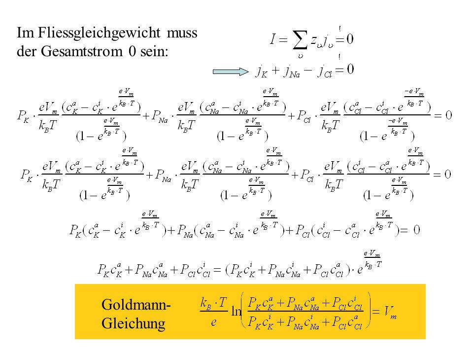 H.Gaub / SS 2007BPZ§4.217 Im Fliessgleichgewicht muss der Gesamtstrom 0 sein: Goldmann- Gleichung