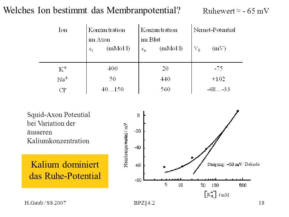 H.Gaub / SS 2007BPZ§4.218 Welches Ion bestimmt das Membranpotential? Ruhewert - 65 mV Kalium dominiert das Ruhe-Potential Squid-Axon Potential bei Var