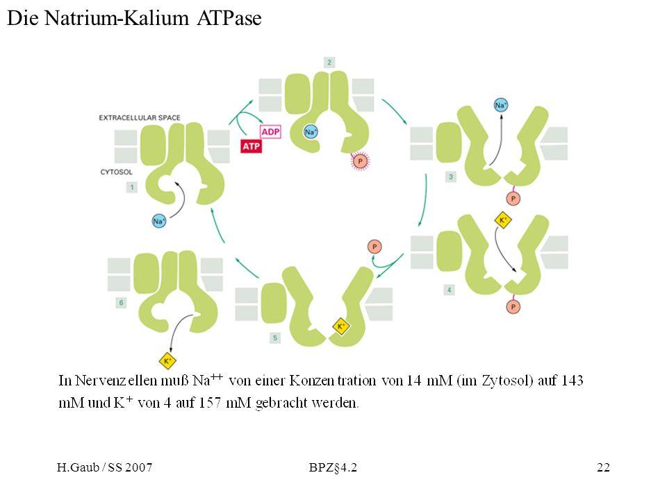 H.Gaub / SS 2007BPZ§4.222 Die Natrium-Kalium ATPase